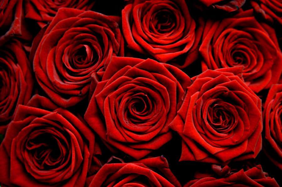колко рози се подаряват