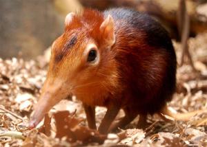 най-малкият бозайник